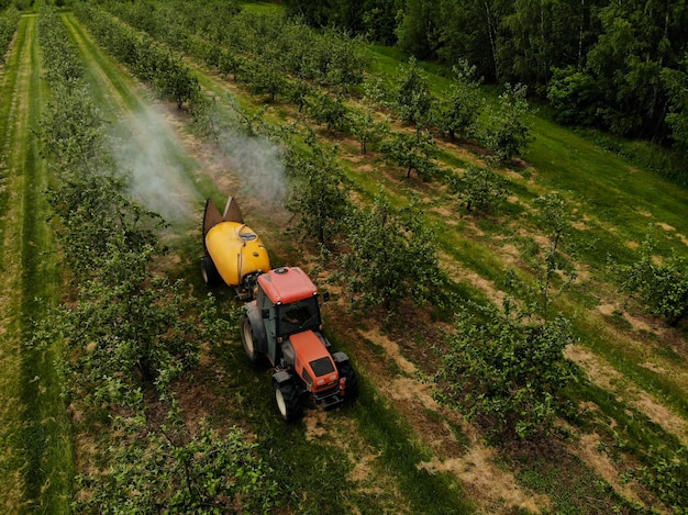 A red tractor sprays pesticides in an apple orchard spraying an apple tree with a tractor