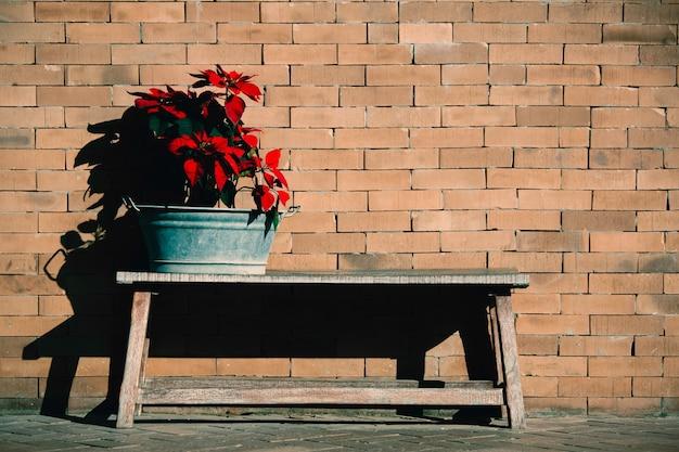 Красные тропические цветы на деревянной скамейке перед старой кирпичной стеной в солнечном свете.