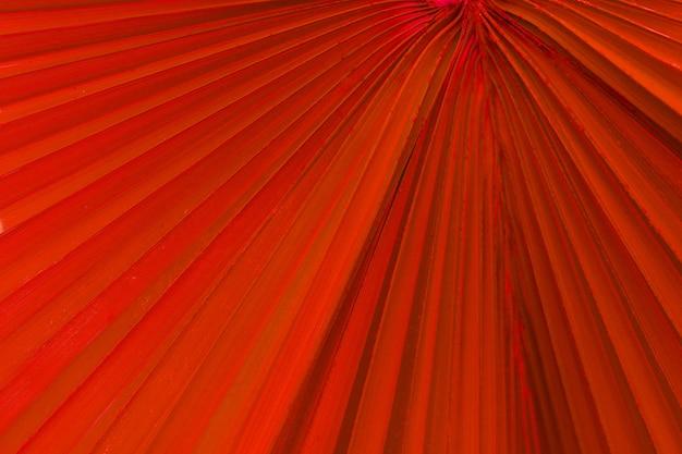 붉은 열대 야자수 잎은 배경 이미지로 표면 질감 이미지를 닫습니다. 줄무늬가 있는 야자수 잎 텍스처
