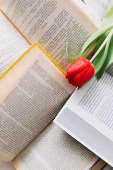 Red tulip on books