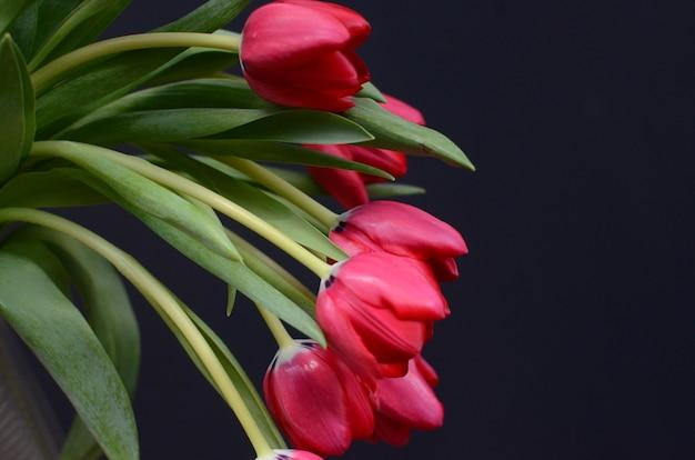 검은 바탕에 빨간 튤립 꽃