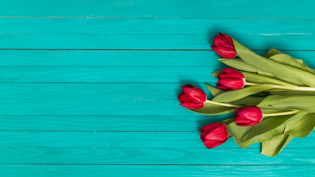Red tulip flowers on green backdrop