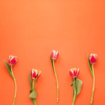 オレンジ色のテーブルの上の赤いチューリップの花