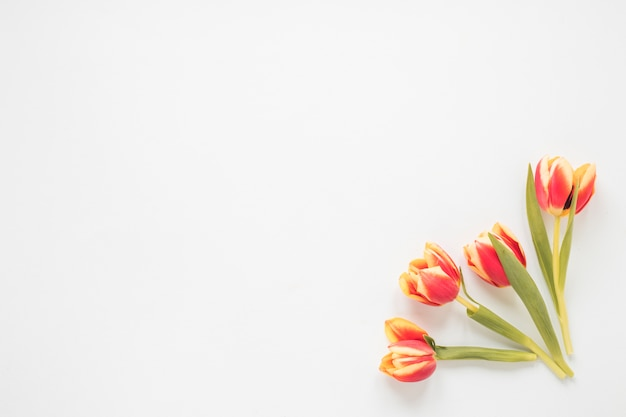 Red tulip flowers on white table