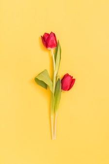 Red tulip flowers above yellow backdrop
