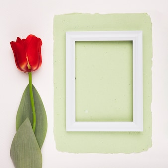 Red tulip near the white wooden frame on green paper over white backdrop