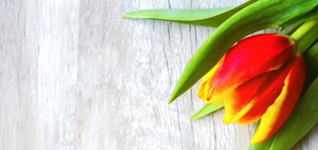 木製の背景に赤いチューリップ。母の日または国際女性デーの招待はがき。広告や宣伝のためのミニマリストの明るい花。春の花。