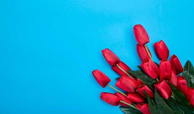 Red tulips flowers on blue background