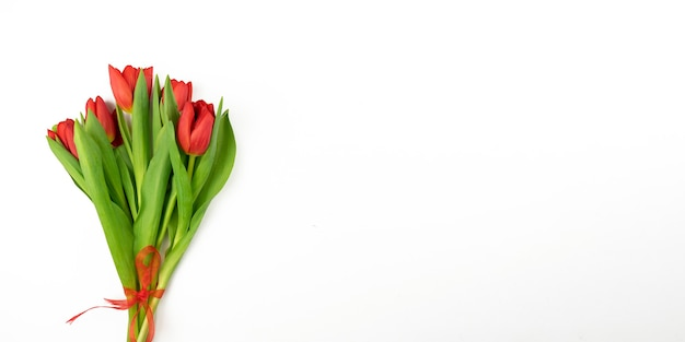 Red tulips lie on a white background. banner