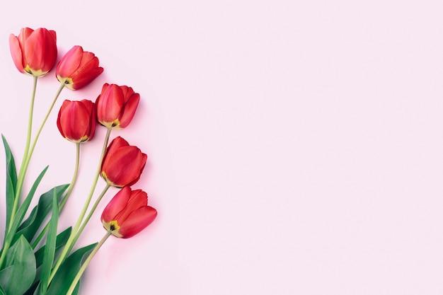 Красные тюльпаны на розовом Premium Фотографии
