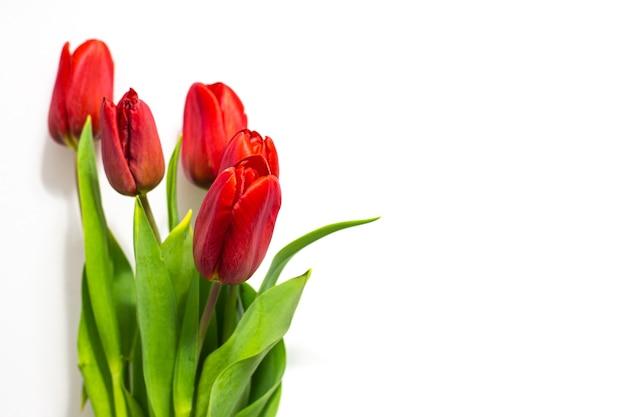 흰색 바탕에 빨간 튤립입니다. 발렌타인 데이, 행복한 여성의 날 축하를위한 축제 봄 꽃다발 ..