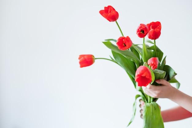 Красные тюльпаны на белом фоне. весенние цветы и флористика концепция.