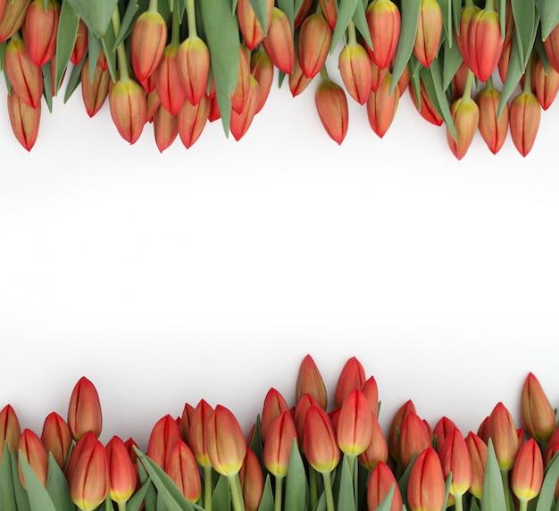 白地に赤いチューリップ