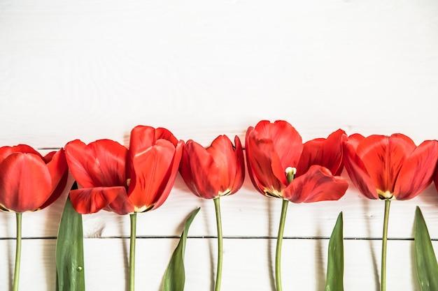 行、クローズアップ、概念の春の花の白い木製の背景に赤いチューリップ