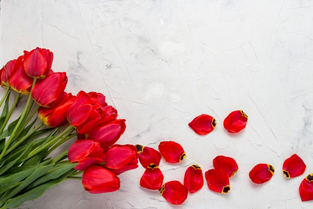 Red tulips and petals on a light stone surface. copy space. flat lay, top view