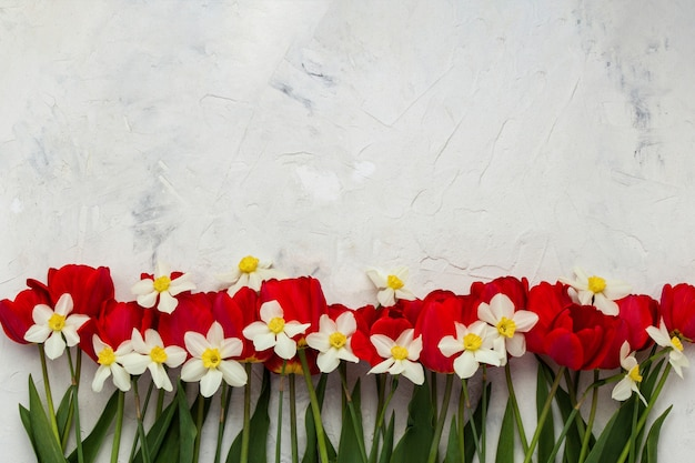 Red tulips and white daffodils on a light stone surface. flat lay, top view