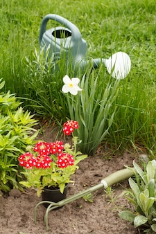 정원 침대에 빨간 버베나 꽃, 손 갈퀴, 물뿌리개.