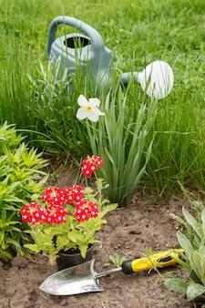 정원 침대에 빨간 버베나 꽃, 손 삽, 물뿌리개.
