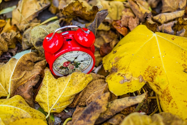 Красные старинные часы в желтых осенних листьях