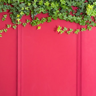 Red wall with frame half covered by common ivy. also known as hedera helix, english ivy or european ivy. copy space