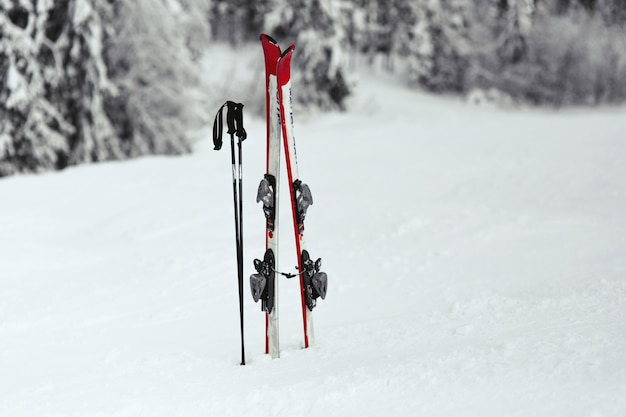 Red and white skis put in the snow in forest