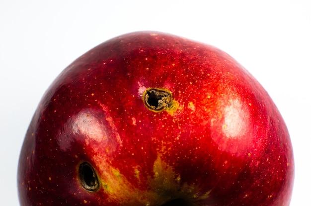 흰색 바탕에 빨간 벌레 버 릇된 사과입니다. 확대.