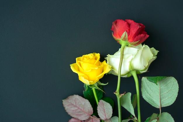 暗い背景に赤黄色と白のバラ