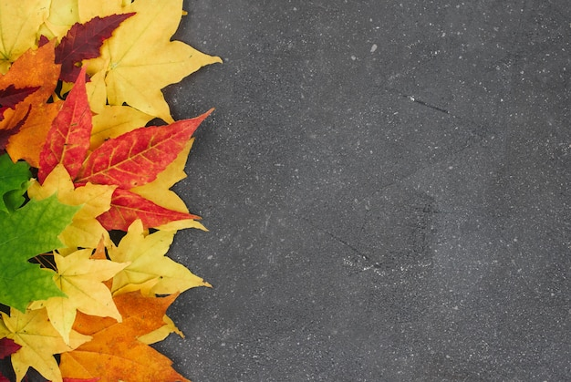 Red, yellow and green maple leaves on a gray textured background with space for text
