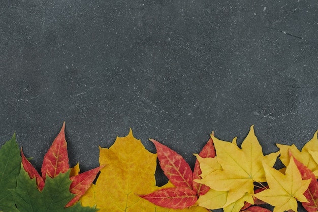 Red, yellow and green maple leaves on gray textured