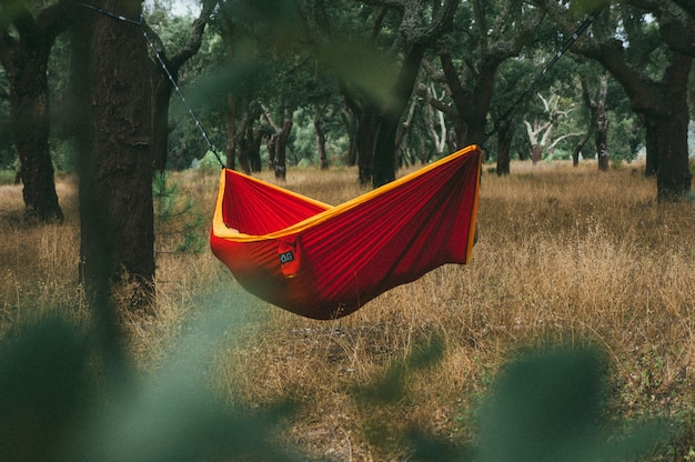 Red and yellow hammock hanging between tall trees