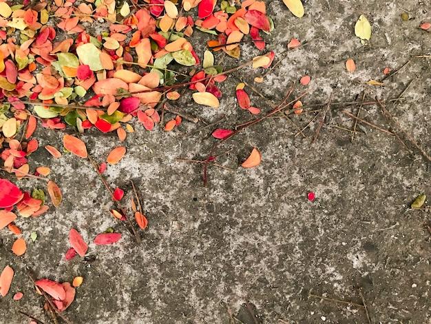 コンクリート床に赤い黄色の葉