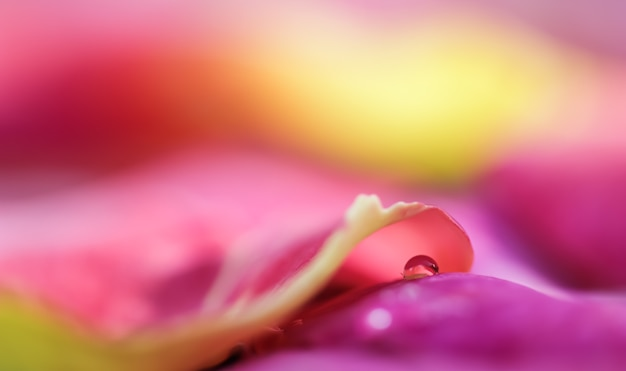 Красно-желтые лепестки роз с каплями воды, ароматерапия и спа-концепция, размытый цветочный фон