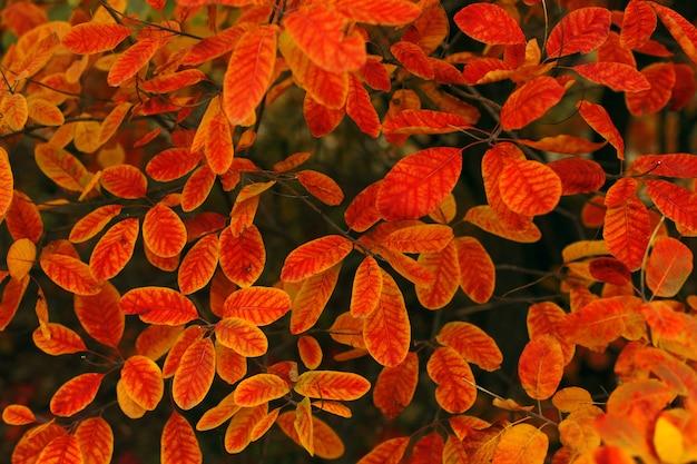 茂みに赤黄色の丸い葉。秋の背景、壁紙のテクスチャ。