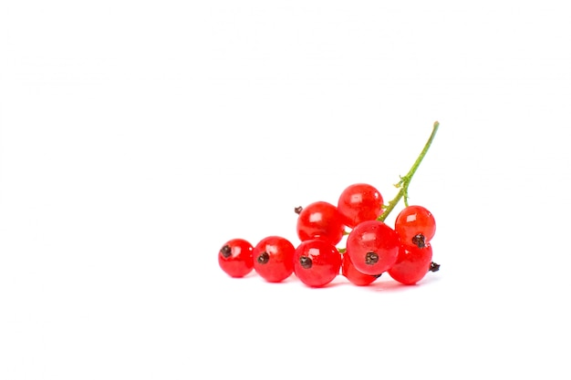 Redcurrant isolated on the white background