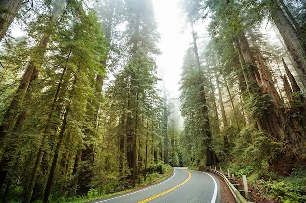 アメリカ合衆国、北カリフォルニアのレッドウッドハイウェイ