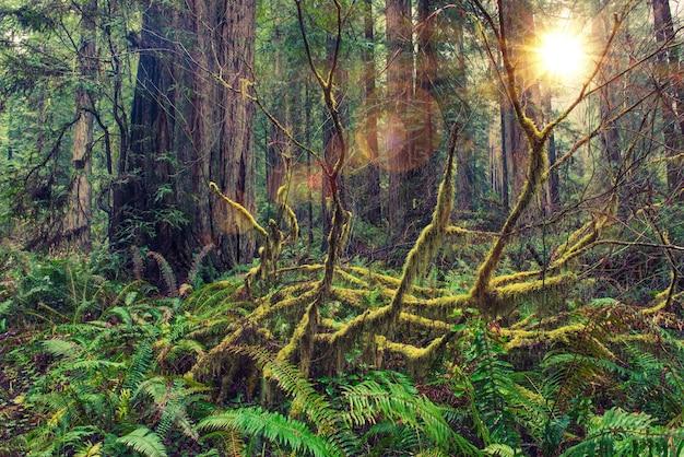Тропический лес redwood
