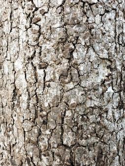 Ree bark close up texture