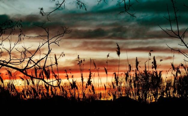 갈대 배경 하늘 저녁 태양 일출 빛 아침