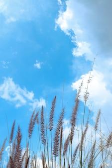 빈 공간과 배경을 위한 아름다운 하늘이 있는 갈대 꽃