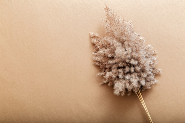 베이지색 공예 종이 배경에 갈대 팜파스입니다. 복사 공간과 무성한 갈대 팜파스의 꽃 베이지색 프레임 배경.