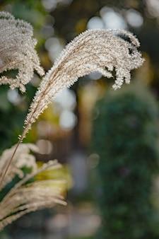 Reed plants on bokeh