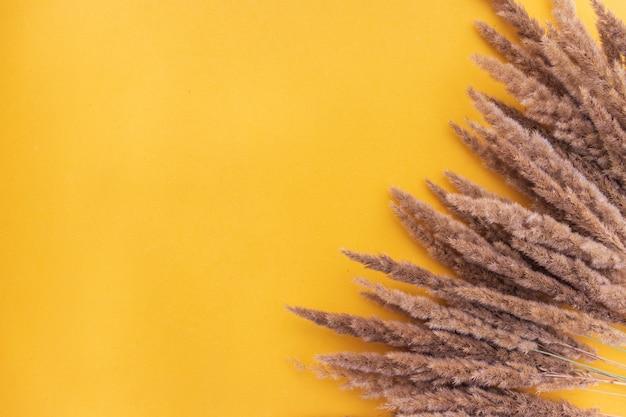 Семя тростника на желтом фоне.