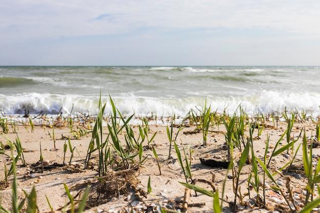 Reed stalks on the seashore. waves on the sea. ocean view