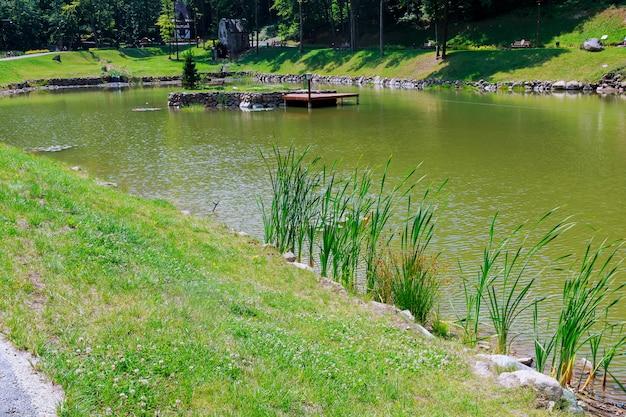 Тростник на берегу озера, селективный фокус