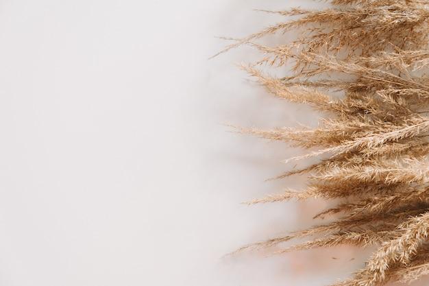 Reeds bouquet. copy space