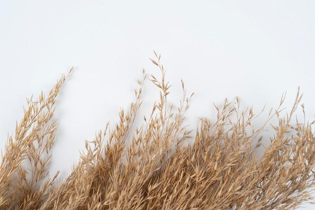 Камыши, изолированные на белом фоне, сухая трава, изолированные на белом фоне с пространством для текста