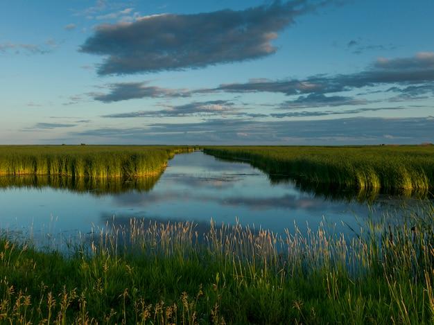 Reeds in the lake, riverton, manitoba, canada