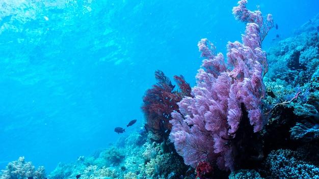 Риф кораллов под голубой чистой водой
