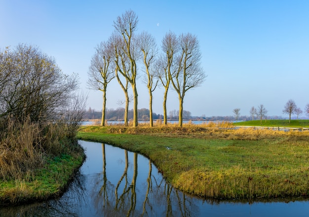 Reflection of 6 trees near in the polder near utrecht (nl) in landscape mode