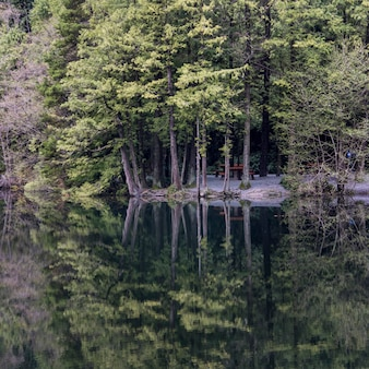 Reflection of forest tree line along a lake, whistler, british columbia, canada